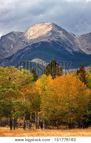 The leaves change to yellow and red beneath a Colorado Mountain