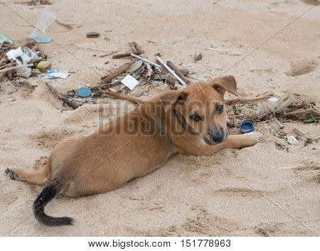 Very cute brown puppy dog on sand and looking back at the beach