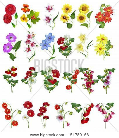 colorful bright flowers isolated on white background