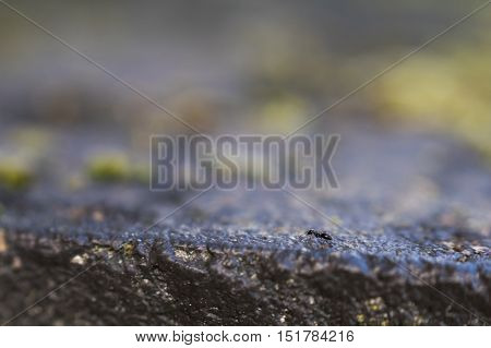 Ant crawling on a stone - captured with shallow depth of field.