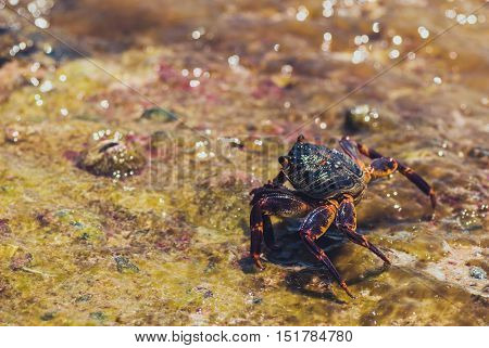 Wet sea crab on the stone. sunny summer day.
