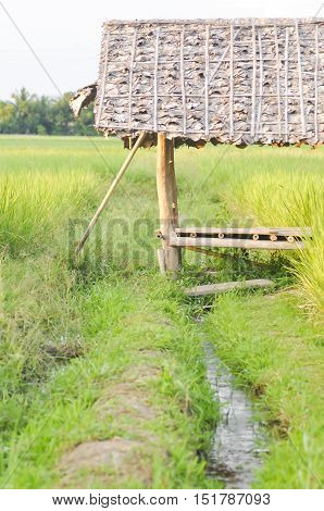 the hut near the rice field or paddy field
