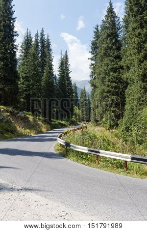 Mountain Road Among Fir Trees