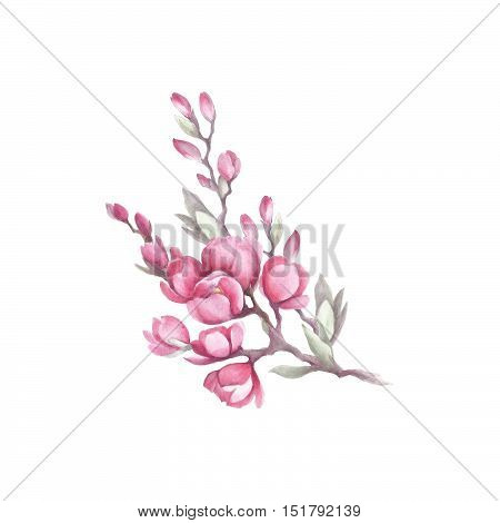Branch of Japanese quince. hand draw watercolor illustration.