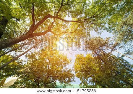 Tree canopy sky, up, forest, color, colorful,