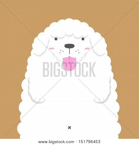 cute big fat white Poodle dog on light brown background
