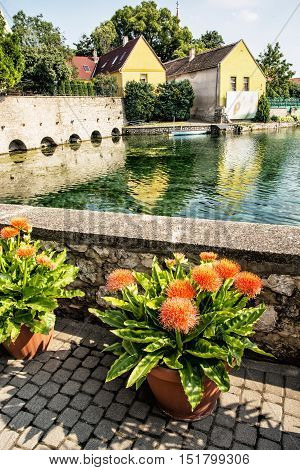 The city's architecture is reflected in the lake Tapolca in Hungary central Europe. Beautiful potted flowers. Tourist destination. Vertical composition.