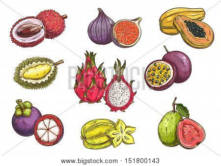 Tropical and exotic fruits. Isolated vector sketch of lychee, durian, mangosteen, fig, dragon fruit, carambola, papaya, passion fruit guava