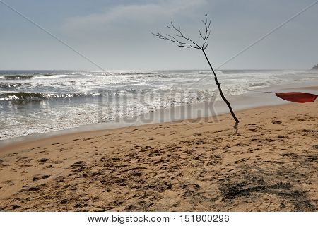 Bare tree on a beach with rough waves