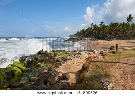 Coconut palms on a rock strewn beach pounded by rough waves