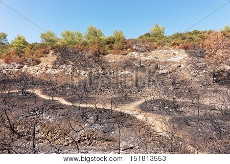 Burned forest after a huge fire of Portugal