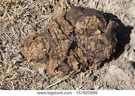 Single pile of bison scat in grass field