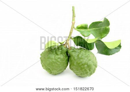 Close-up group of kaffir lime on white background