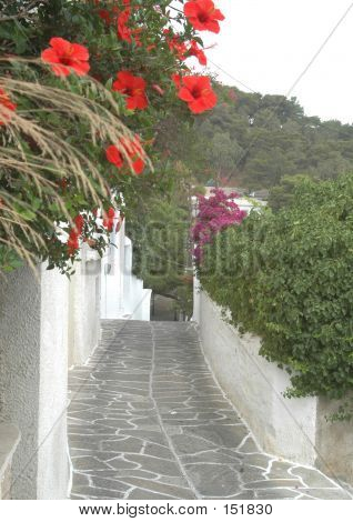 Stone Tiled Road