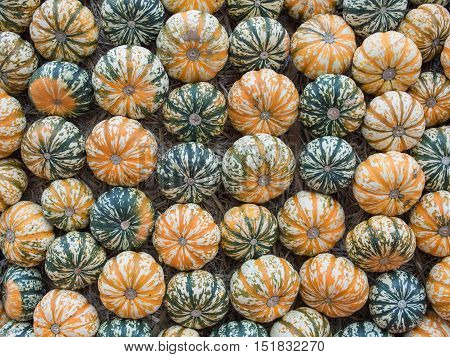 Pumpkins: Festival Squash On Hay Cucurbita pepo