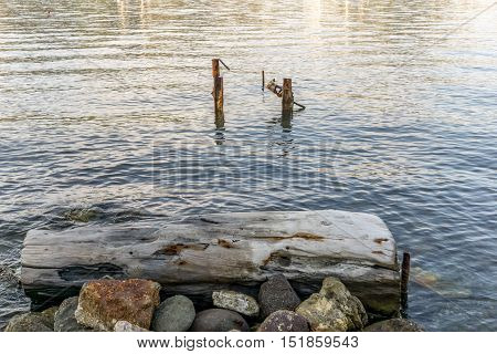 Pickets on the sea with a trunk and rocks