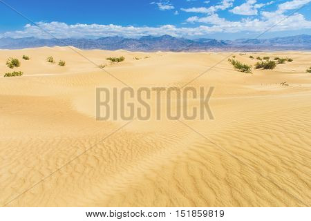 Sand dunes in the Death Valley National Park. California, USA