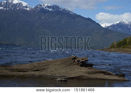 River running into Lago Yelcho in the Aysen Region of southern Chile. Large body of fresh water surrounded by lush forest and snow capped mountains.
