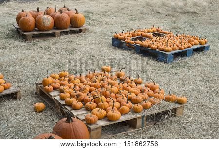 Several sizes,shapes and variety of pumpkins set on wooden bales of hay in rural country home for sale