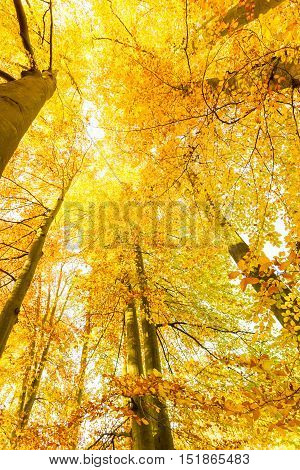 Nature outdoor beauty scenery concept. Autumnal trees in sunshine. Woodland during fall season covered by dried foliage.