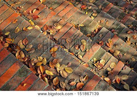 brickwork stairs with fallen hornbeam purple leaves