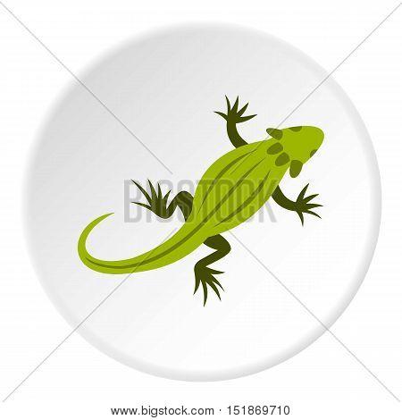 Striped iguana icon. Flat illustration of sriped iguana vector icon for web