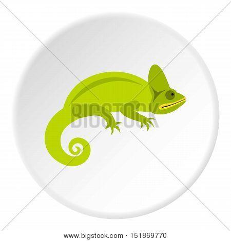 Chameleon icon. Flat illustration of chameleon vector icon for web