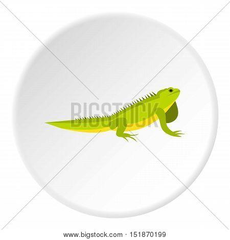 Iguana icon. Flat illustration of iguana vector icon for web