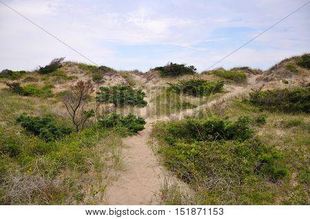 Sand Dune in Cape Hatteras National Seashore, on Hatteras Island, North Carolina, USA.