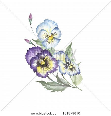 Bouquet of pansies. Hand draw watercolor illustration.