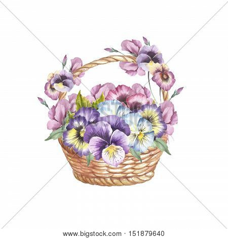 Basket of pansies. Hand draw watercolor illustration