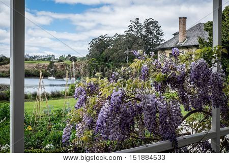 HDR image of Kerikeri Inlet with Stone Store and wisteria flowers
