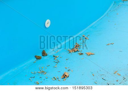 Two frogs in an empty swimming pool