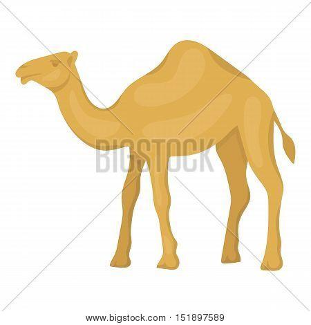 Camel icon in cartoon style isolated on white background. Arab Emirates symbol vector illustration.