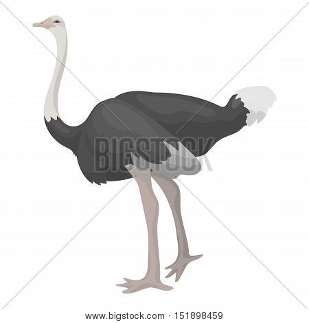 Ostrich icon in cartoon style isolated on white background. Bird symbol vector illustration.