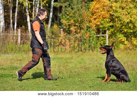 Man dog trainer and doberman pinscher sitting on grass on fall day