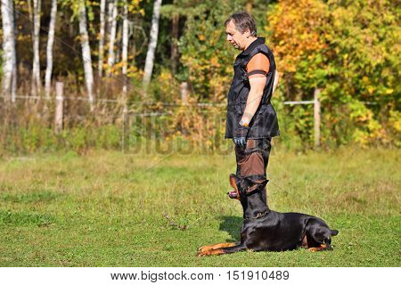 Man is dog trainer with doberman pinscher stands on grass on fall day