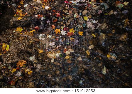October Fall Foliage Background. Colorful autumn leaves scattered on a riverbank in October.