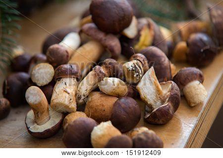 close up on fresh woodland fungi with boletus mushrooms