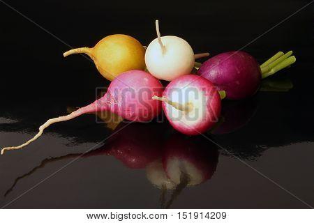 Fresh multi coloured radish on black background