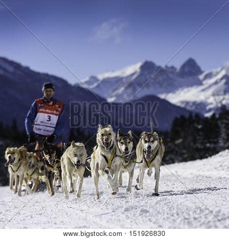 SARDIERES VANOISE FRANCE - JANUARY 20 2016 - the GRANDE ODYSSEE the hardest mushers race in savoie Mont-Blanc Daniel JUILLAGUET sweeden musher Vanoise Alps