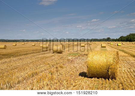Color photo of rolls of hay in the field