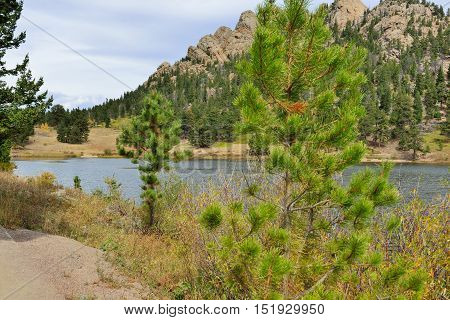 Pine trees, mountains and alpine lake in daylight
