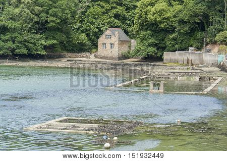 Belon River In Brittany