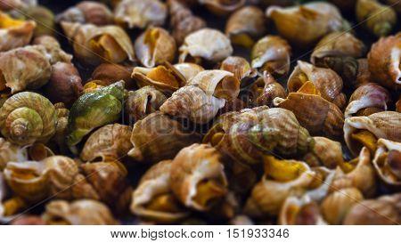 Heap of cooked sea snails. shallow depth of field. Tilt-Shift