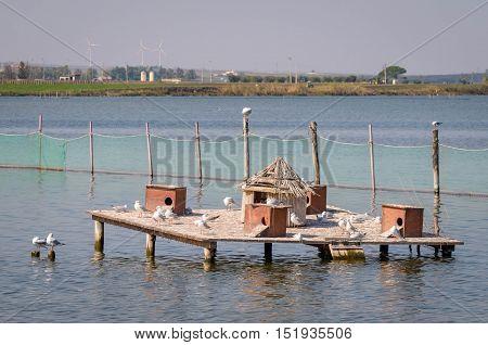 Houses for birds in a lake (Lesina Puglia)