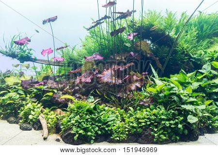 Aquarium With Water-plant And Animals