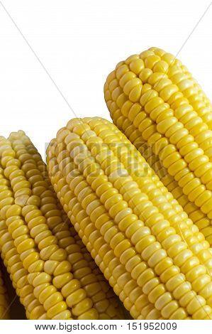 many yellow corn on white background  .