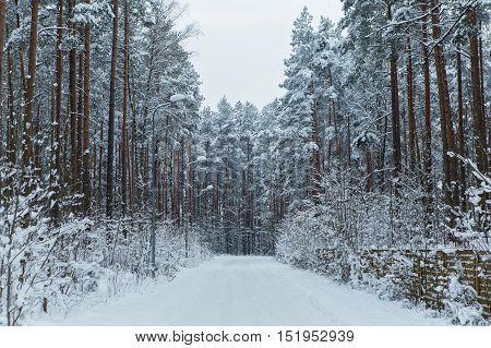 Large frozen road in snowy coniferous forest. Winter season. Outdoor shot.