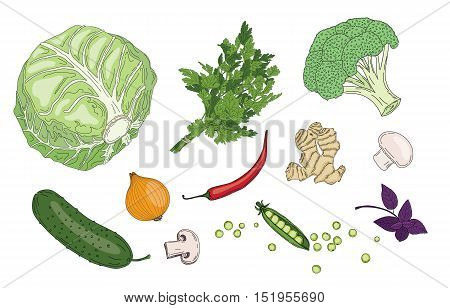 Vegetables and herbs fresh spring green organic vector collection: corn, paprika, pepper, red beet, green pea, chilly, onion, cucumber, carrot, basil, mushroom, ginger, bean.Veggie ingredients is very good for healthy, because include many freshness multi